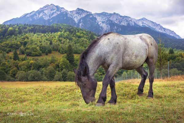 Piatra-Craiului-national-reservation